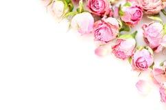 Kwitnie skład Rama robić wysuszony wzrastał kwiaty na białym tle obrazy royalty free