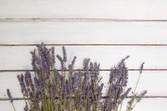 Kwitnie skład Rama robić świeża lawenda kwitnie na białym tle Lawenda, kwiecisty tło Mieszkanie nieatutowy obrazy royalty free
