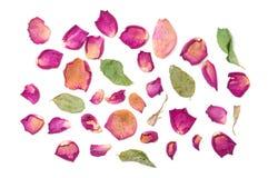 Kwitnie skład wysuszony wzrastał kwiaty to walentynki dni Drie Fotografia Royalty Free