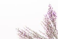 Kwitnie sk?ad Menchia Kwitnie na r??owym tle Wielkanoc, wiosny poj?cie 2007 pozdrowienia karty szcz??liwych nowego roku zdjęcie stock