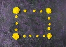 Kwitnie sk?ad Rama robi? r zdjęcia stock