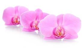 kwitnie storczykową bezszwową tapetę zdjęcia stock