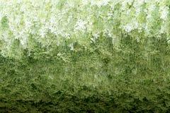 kwitnie storczykowego biel Obrazy Stock