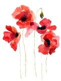 kwitnie stylizującego ilustracyjnego maczka Zdjęcia Royalty Free
