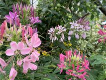 Kwitnie tło w sieci ogrodnictwie zdjęcie stock