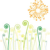 kwitnie trawy słońca Zdjęcia Stock