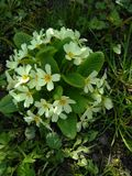 kwitnie trawy zieleni biel Zdjęcie Stock