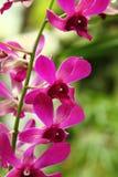 kwitnie tropikalnego Obrazy Stock