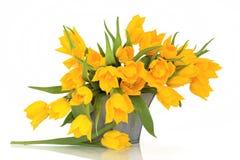 kwitnie tulipanowego kolor żółty Obrazy Royalty Free