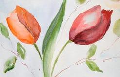 kwitnie tulipany Zdjęcia Royalty Free