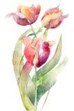 kwitnie tulipany Obraz Royalty Free