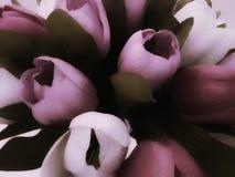 kwitnie tulipany Zdjęcie Stock