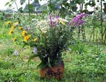 kwitnie wazę dziką Obrazy Stock