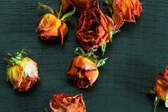 kwitnie wazę Zdjęcie Stock