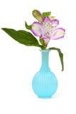 kwitnie wazę Zdjęcie Royalty Free