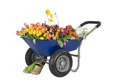 kwitnie wheelbarrow Obraz Stock