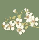 kwitnie wiśni royalty ilustracja