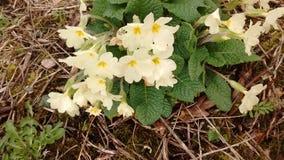Kwitnie wiosna czas Zdjęcie Stock