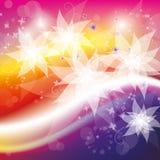 kwitnie złociste purpury Zdjęcie Royalty Free