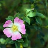 Kwitnie z rozmytym tłem zieleni liście fotografia stock
