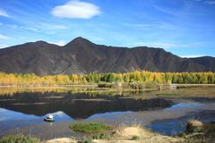 Kyi river and poplar trees Royalty Free Stock Images