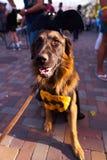 KYIV,乌克兰- 2018年9月9日:作为蝙蝠侠穿戴的狗在Comi 免版税库存照片
