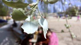KYIV, ΟΥΚΡΑΝΊΑ - 21 ΑΠΡΙΛΊΟΥ 2019: Άποψη από πίσω από ένα φύλλο σε μια ομάδα νέων στο defocus που παίζουν την κιθάρα και απόθεμα βίντεο