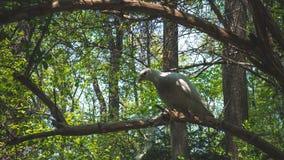 04 23 2019 - Kyiv, de Oekra?ne Botanische Tuin in het centrum van de hoofdstad van de Oekra?ne De duiven zitten op een boomtak royalty-vrije stock afbeeldingen