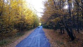 KYIV, UCRÂNIA - 16 de outubro de 2017: A estrada na floresta amarela do outono com carro de polícia video estoque