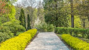 04 23 2019 - Kyiv, Ucr?nia Jardim bot?nico no centro da capital de Ucr?nia ?rvores de floresc?ncia, paisagem bonita fotos de stock