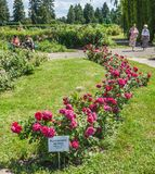 KYIV, UCRANIA: rosas florecientes en el rosario Imagenes de archivo