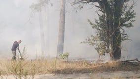 KYIV, UKRAINE - AUGUST 16, 2015: Male conscript firefights at DVRZ forest fire stock video