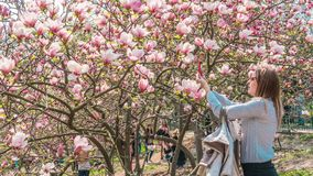 04.23.2019 - Kyiv, Ukraine. Botanical Garden in the center of the capital of Ukraine. The tourists walk in the park and take royalty free stock images