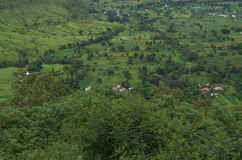 Kyla det gröna jordbruksmarklandskapet-Ii arkivfoto