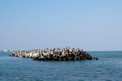 Kyla fåglar i solen Arkivbild