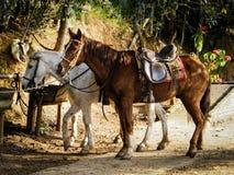 Kyla för hästar Arkivfoto
