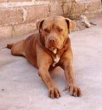 kyla för hund royaltyfria foton