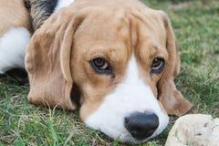 Kyla hunden Royaltyfria Bilder