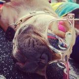 Kyla hunden Royaltyfri Fotografi