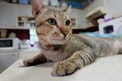 Kyla katten Fotografering för Bildbyråer