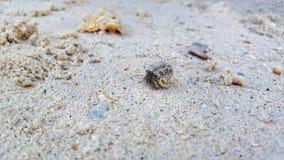 kyla på stranden Arkivbild