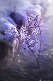 kyld blomma Royaltyfria Foton
