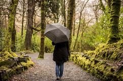 Kylemore abbey - Connemara & Cong - Ireland. A walk in Kylemore Abbey park. A rainy day in a park full of trees! An umbrella was an essential accesory Stock Image