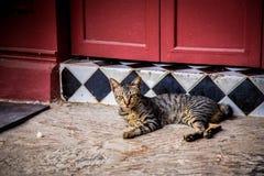 Kylig kylig katt royaltyfria bilder