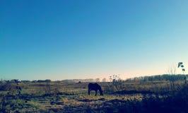 Kylig morgon Fotografering för Bildbyråer