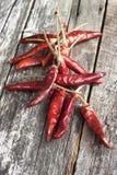 kylig torkad pepparred Fotografering för Bildbyråer