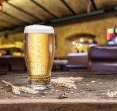 Kylt exponeringsglas av ljust öl och vete på den gamla trätabellen royaltyfria bilder