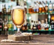 Kylt exponeringsglas av ljust öl på stångräknaren Suddig stångbakgrund arkivfoton