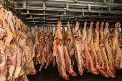 Kylt lager, hängande krokar av djupfrysta lammkadaver Halal snitt arkivbilder