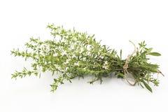 Kyndel Satureja Hortensis som isoleras på vit Arkivbilder